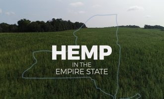 Hemp in NY: How marijuana's controversial cousin could benefit farmers 2