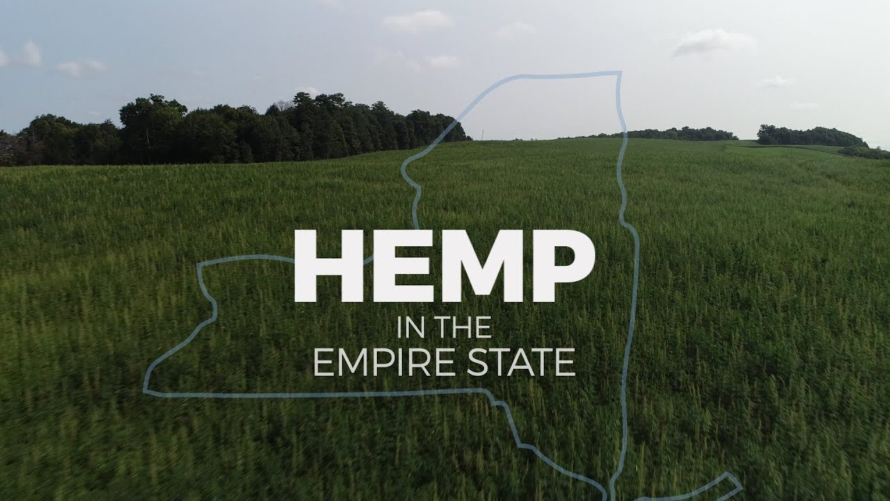 Hemp in NY: How marijuana's controversial cousin could benefit farmers 1