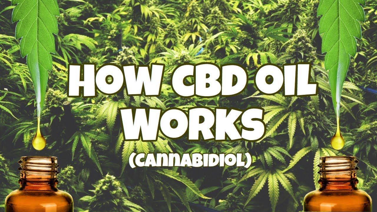 CBD Oil (Cannabidiol)- How It's Different from THC & Benefits 1