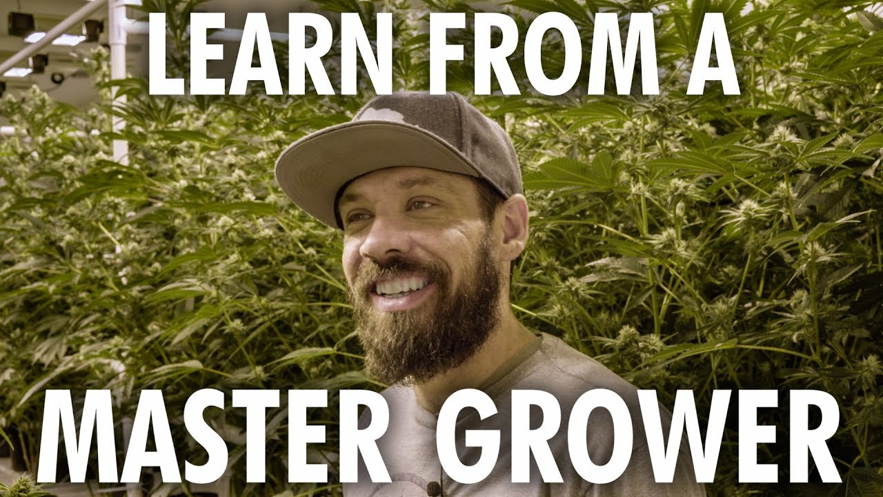 Cannabis Grow Op Tour - Learn from a Master Grower 1