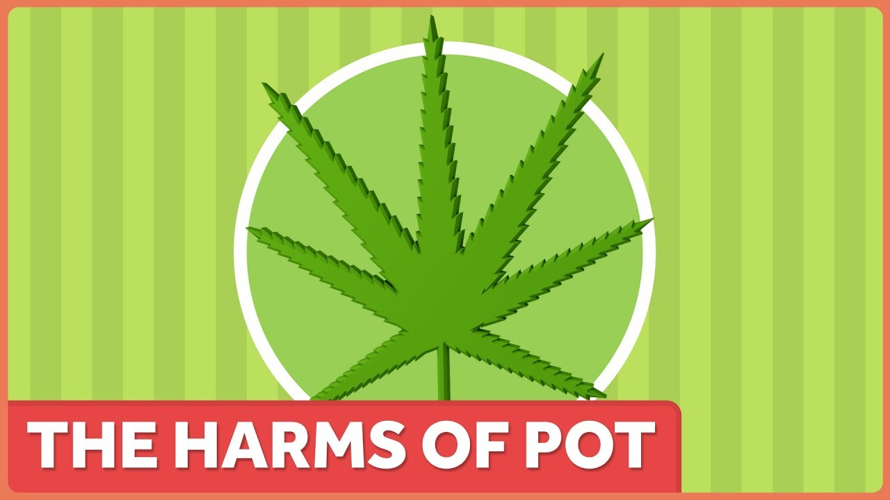 The Harms of Marijuana 1