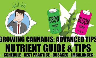 Marijuana Nutrient Guide Schedule Explained - Growing Cannabis 201: Advanced Grow Tips 14
