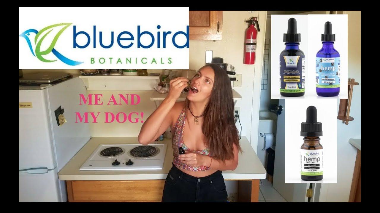 Bluebird Botanicals CBD oil review (for pets too) 1