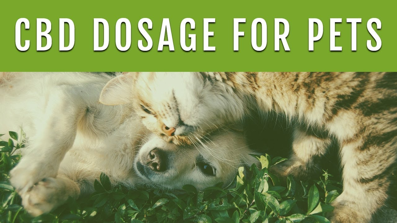 CBD DOSAGE FOR DOGS - How Much CBD Oil Should I Give My Dog? 1