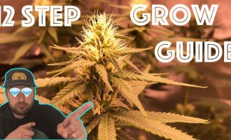 The 12 Step Weed Grow Guide:  Easily Grow Quality Cannabis from the comfort of your Home! 4
