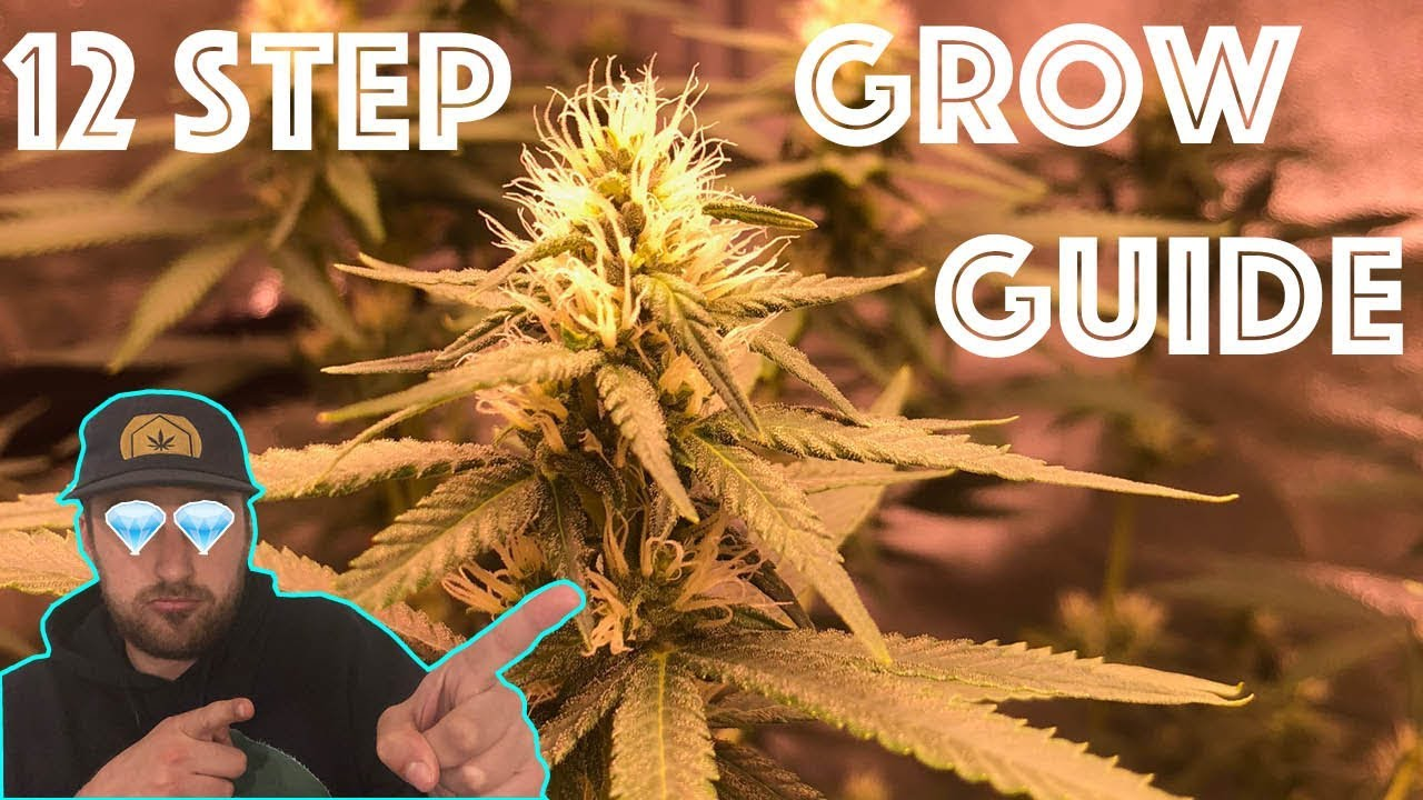 The 12 Step Weed Grow Guide:  Easily Grow Quality Cannabis from the comfort of your Home! 1