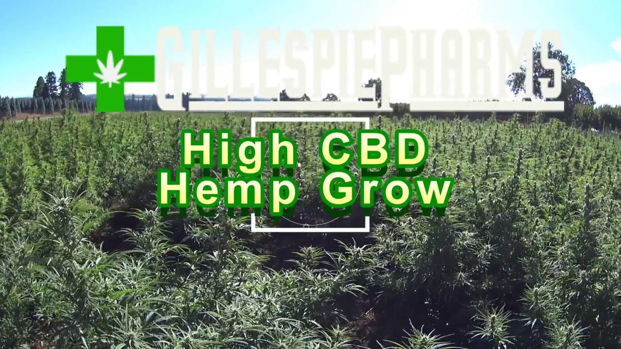 Oregon Grown High CBD Hemp Field: Visit to 5+ Acre Field. 1