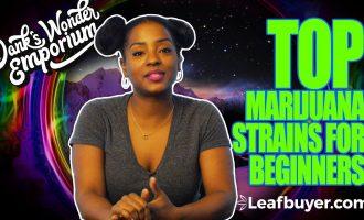 Top Marijuana Strains For Beginners 4