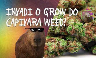 INVADI O GROW DO CAPIVARA WEED - parte 1 8
