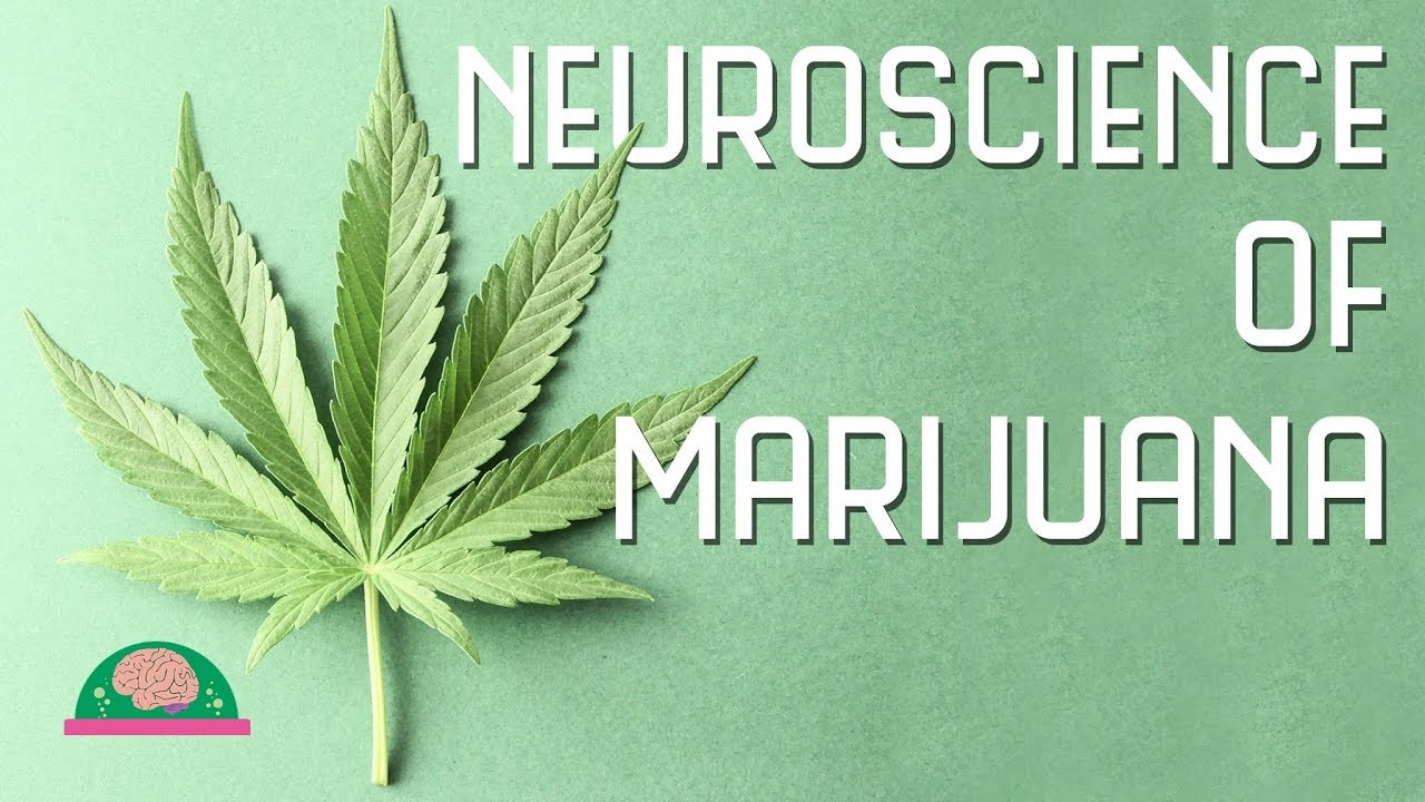 How does marijuana affect your brain? 1