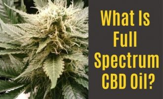 What is Full Spectrum CBD Oil?  Benefits, Drawbacks and Options! 9