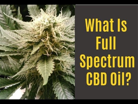 What is Full Spectrum CBD Oil?  Benefits, Drawbacks and Options! 1