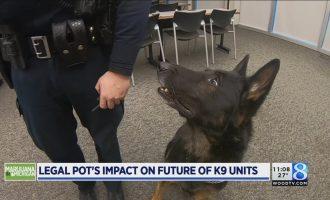 Marijuana in Michigan: How will police K-9s fit? 4