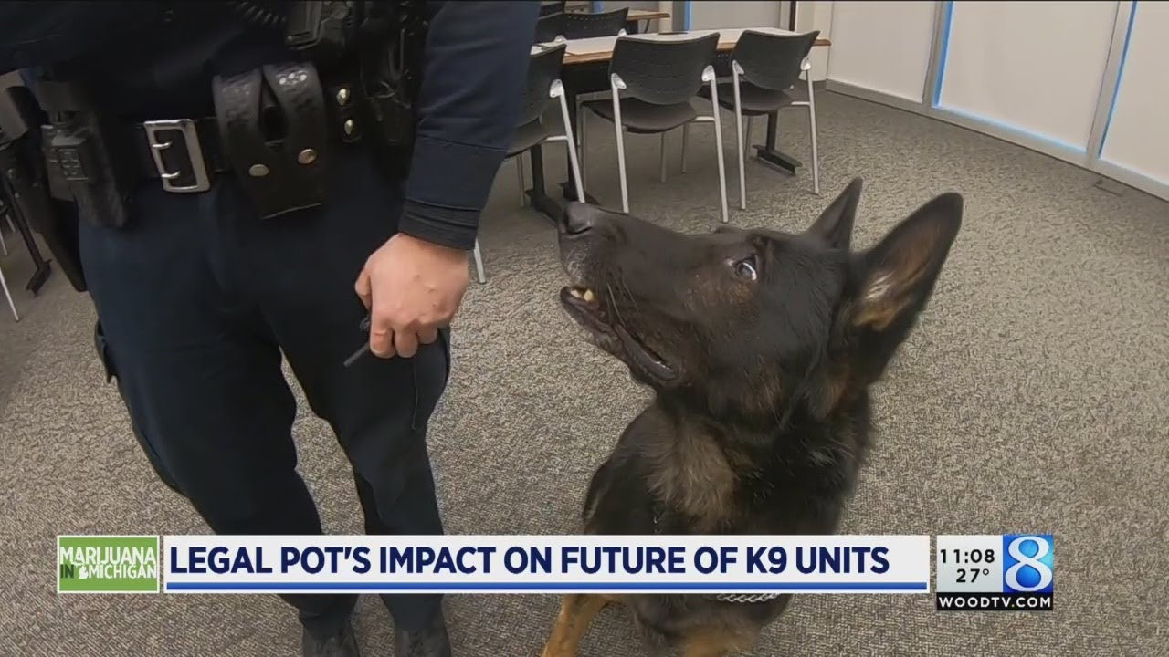 Marijuana in Michigan: How will police K-9s fit? 1