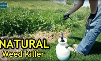 Testing Natural Weed Killer + Seeded Bare Spots Update 9