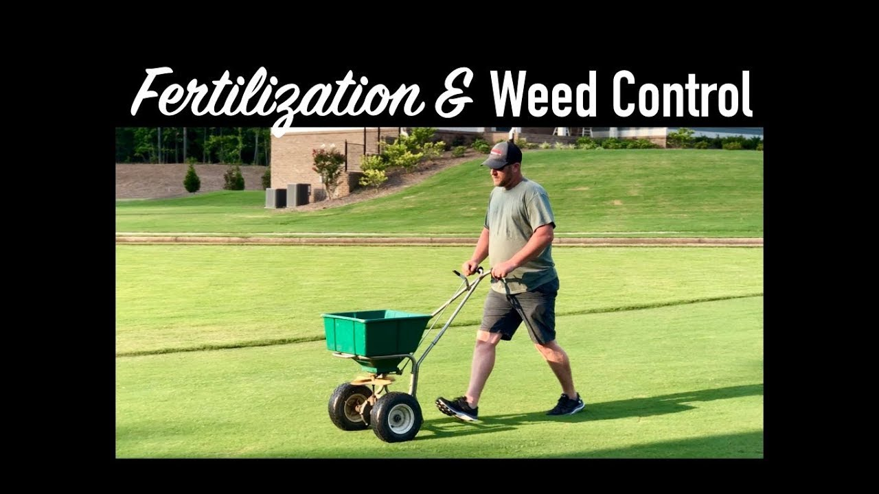 LAWN FERTILIZATION AND WEED CONTROL TIPS || The Southern Reel Mower 1