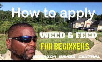 How to apply Weed and Feed for beginners, plus Scotts Weed and Feed 9