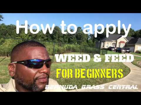 How to apply Weed and Feed for beginners, plus Scotts Weed and Feed 1