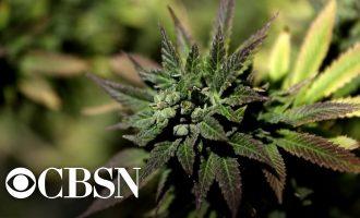 Trump administration tells agencies to promote negative impact of marijuana use 8