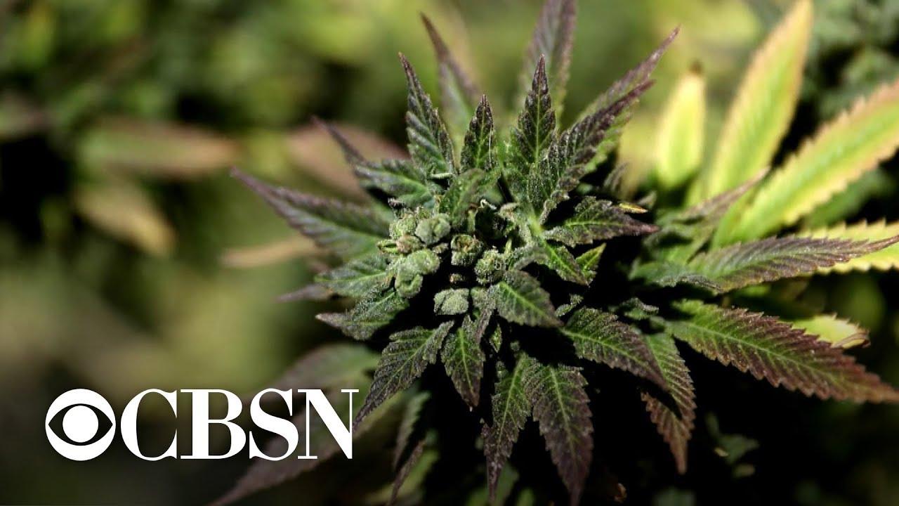 Trump administration tells agencies to promote negative impact of marijuana use 1
