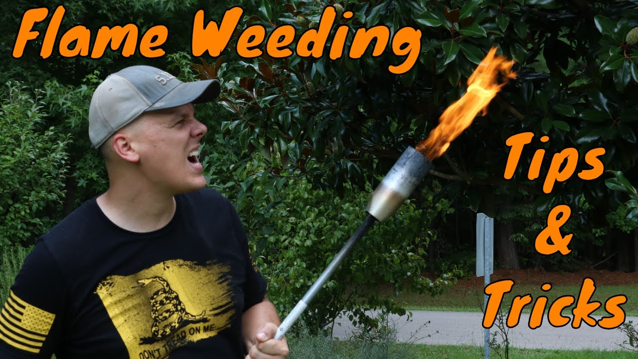 Sutton Vlog #7 - Tips and Tricks for Flame Weeding (Red Dragon) 1
