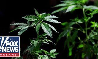 Should America follow Canada's lead on legalizing marijuana? 7