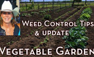 Vegetable Garden Weed Control Tips and Garden Update - How to Get Rid of Weeds in Vegetable Garden 7