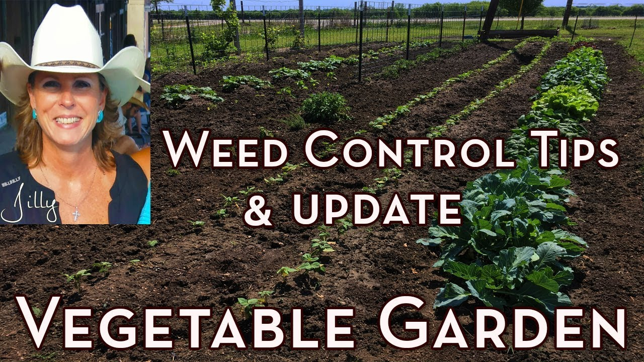 Vegetable Garden Weed Control Tips and Garden Update - How to Get Rid of Weeds in Vegetable Garden 1