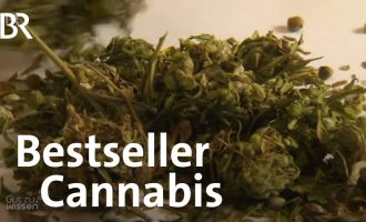 Cannabis: Wie gesund ist Cannabidiol (CBD)? | Gut zu wissen | BR 4