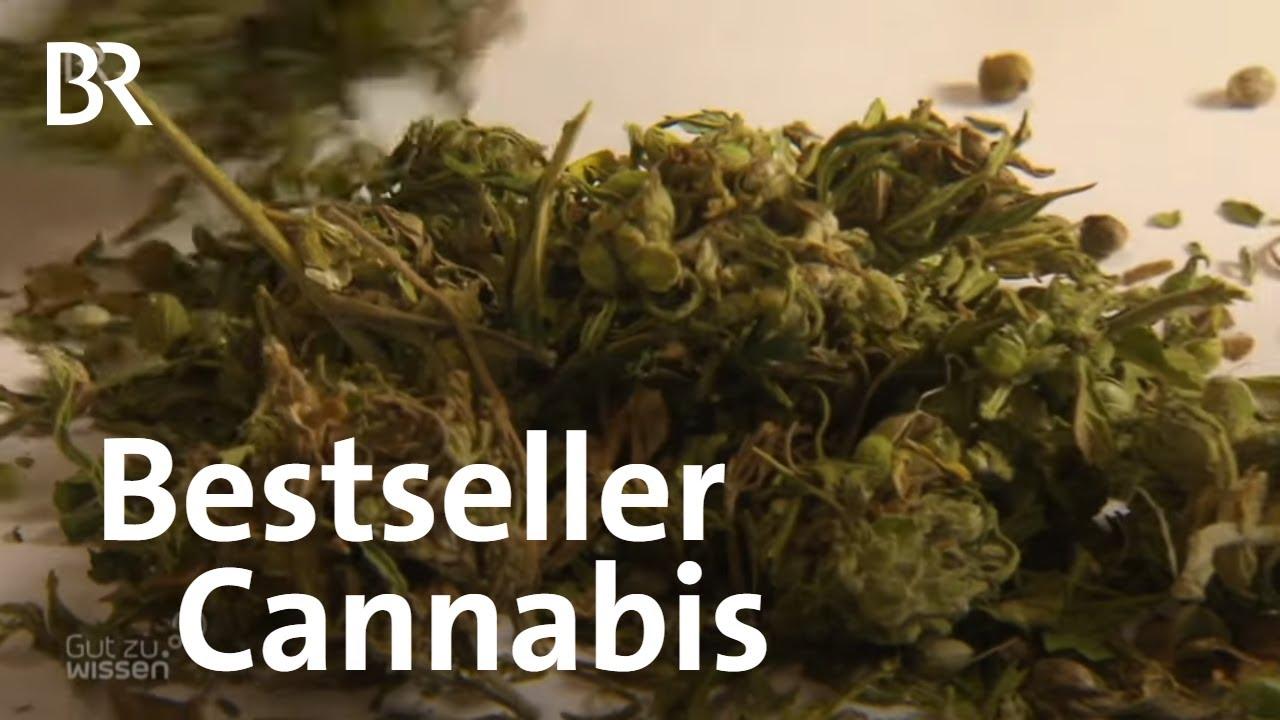 Cannabis: Wie gesund ist Cannabidiol (CBD)? | Gut zu wissen | BR 1