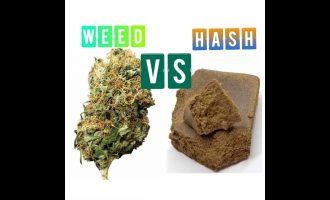 Weed vs Hash 4