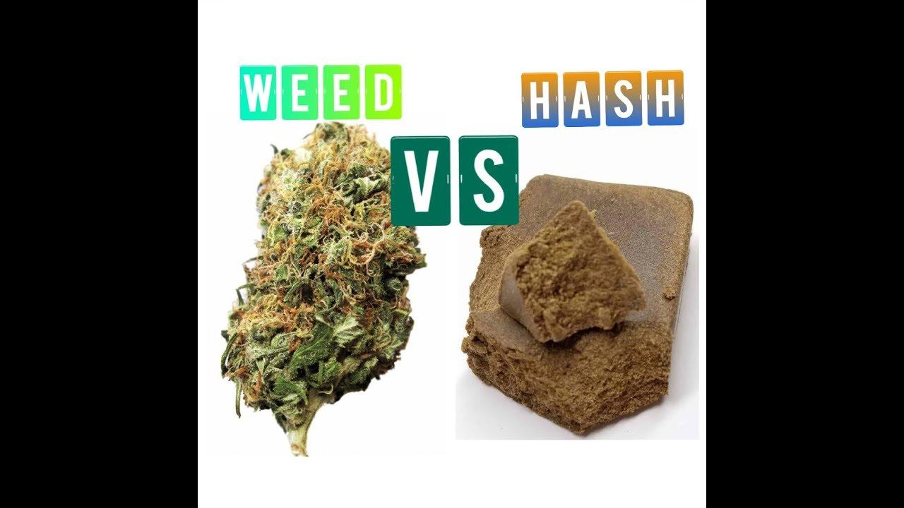 Weed vs Hash 1