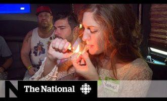 Future of marijuana in U.S. a hazy situation 2