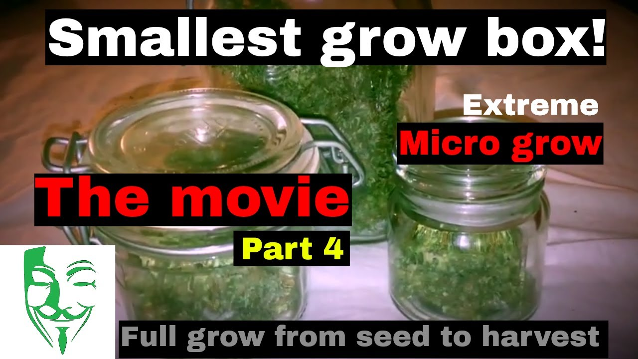 Micro Grow: From seed to harvest (PC grow box) White Widow CBD movie FULL GROW GUIDE 1