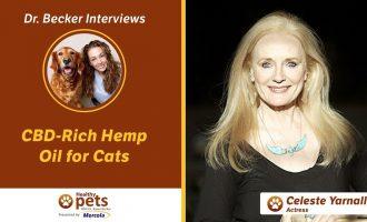 Dr. Becker Interviews Dr. Yarnall About CBD-Rich Hemp Oil for Cats 10