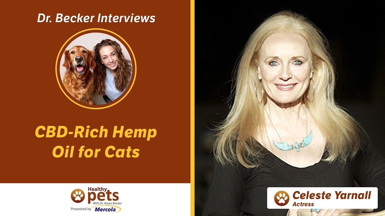 Dr. Becker Interviews Dr. Yarnall About CBD-Rich Hemp Oil for Cats 1