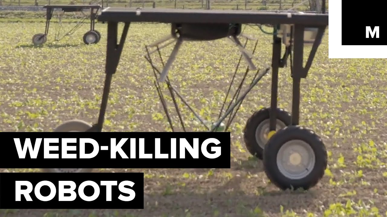 These Weed-killing Robots Could Give Big Agrochemical Companies A Run For Their Money 1