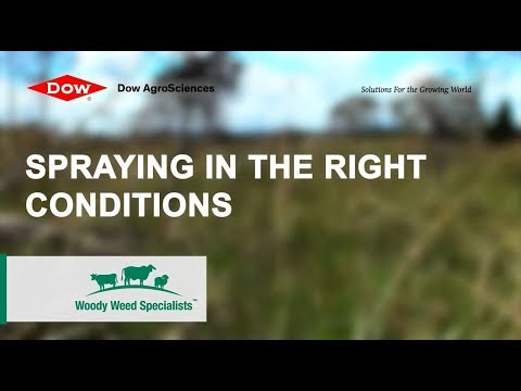 Woody Weed Specialists Tips - Spraying Weeds in the Right Conditions 1
