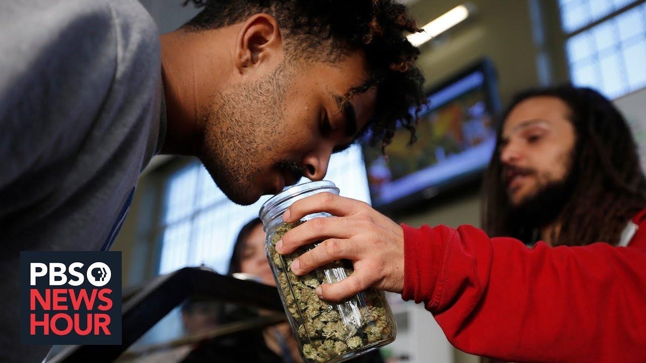 Marijuana has become big business. So why are small growers struggling to survive?   Marijuana 1