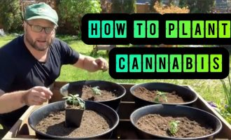 Step by Step How to Plant Outdoor Cannabis 7