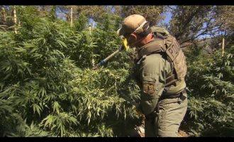 Illegal marijuana farms ravage America's national forests 9