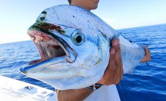 Weed Line Dolphin (Mahi Mahi) Fishing Tips in the Florida Keys 8