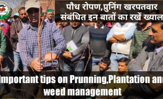 Important Tips on Prunning, Plantation & Weed Management in Apple orchard 5