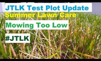 JTLK Test Plot Update | Summer Lawn Tips | Mowing, Fertilizing, Watering, Weed Control 1
