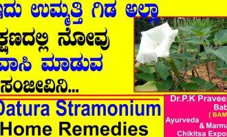 Datura Stramonium, Jimson Weed, Thorn Apple Benefits | Ayurveda tips in Kannada|Praveen Babu|Ummatti 4