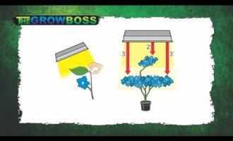 TIPS AND TRICKS FOR GROWING BETTER AND BIGGER WEED - MARIJUANA HEMP CBD CANNABIS - THE GROW BOSS 8