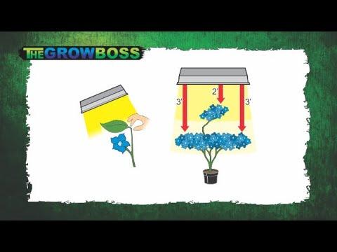 TIPS AND TRICKS FOR GROWING BETTER AND BIGGER WEED - MARIJUANA HEMP CBD CANNABIS - THE GROW BOSS 1