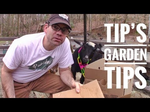 Simple & CHEAP Weed Control (TIP'S TIP) FREE Weed Mat - FREE Weed Barrier 1