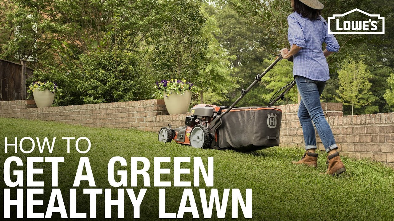 Lawn Care 101: How to Weed, Seed, Feed, Mow, & Water 1