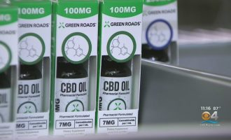 Many In Florida Look To Cash In On CBD Oil Now That Hemp Is Legal 8
